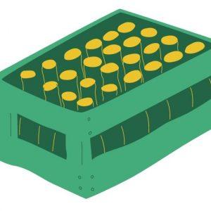 Ur-type / Pils